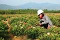 Quảng Bình: Ứng dụng hiệu quả KH&CN trong phát triển kinh tế vùng đất gò đồi