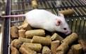 Nghiên cứu độc tính cấp (LD50) của chế phẩm vi nhũ tương CND trên chuột nhắt trắng (Mus musculus var. albino)