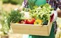 Tiêu chuẩn thực phẩm Codex với các mục tiêu phát triển bền vững của Liên hiệp quốc