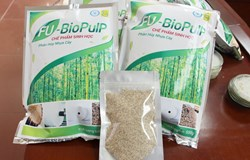 Sử dụng chế phẩm sinh học loại bỏ nhựa cây trong giấy nguyên liệu: hướng đi thân thiện môi trường cho ngành giấy