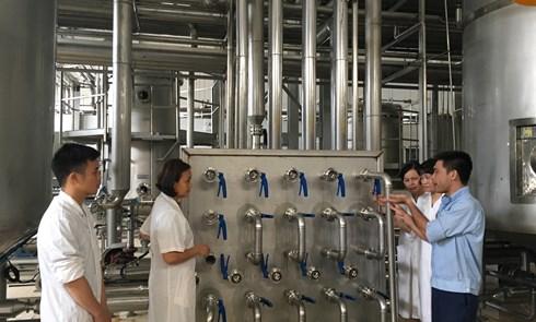 Nghiên cứu thành công nghệ sản xuất bia Gừng và gừng lên men