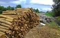 Nghiên cứu điều kiện tiền xử lý gỗ keo bởi chủng nấm Perenniporia sp. TĐ95 nhằm phân hủy nhựa cây trong nguyên liệu sản xuất bột giấy