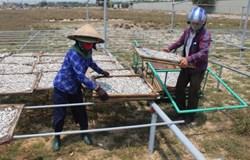 Quảng Trị: Tập huấn chế biến cá hấp đảm bảo an toàn thực phẩm