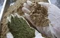 Sản xuất chế phẩm sinh học từ lá cây thầu dầu và lá cây thuốc cá