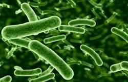 Tối ưu hóa điều kiện nuôi cấy probiotics dùng trong chăn nuôi bằng phương pháp bề mặt đáp ứng