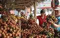 Bộ Công Thương: Xây dựng hệ thống phân phối gắn với an toàn thực phẩm