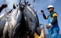 Thu nhận thành công gelatin từ da cá ngừ đại dương