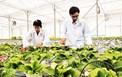 Phú Yên triển khai kế hoạch thực hiện phát triển công nghiệp sinh học ngành nông nghiệp đến năm 2030
