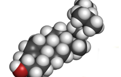 Chuyển hóa sinh học phytosterol thành androstenedione (AD) nhờ chủng Mycobacterium neoaurum