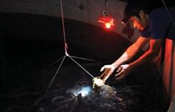 Tận dụng nguồn nguyên liệu địa phương sản xuất thức ăn công nghiệp cho cá chính theo hướng bền vững