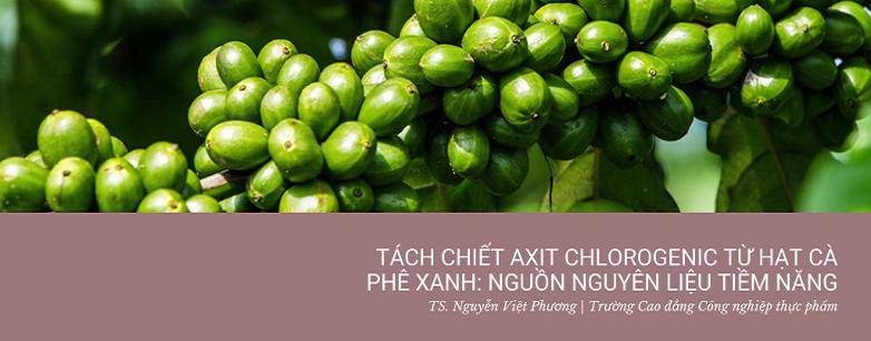 Tách chiết axit chlorogenic từ hạt cà phê xanh: Ng