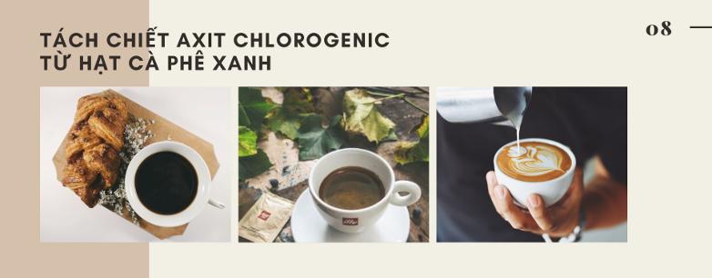 tách chiết axit chlorogenic từ hạt cà phê xanh